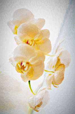 Photograph - Heavenly Flowers by Maria Coulson