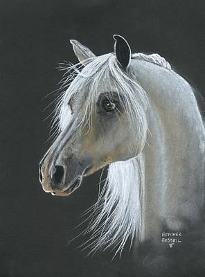 White Arabian Art Print by Heather Gessell