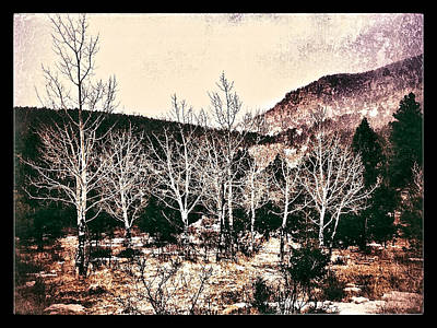 Digital Art - White Aspen by Dan Miller