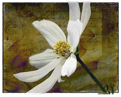 Digital Art - White Aster Study Vi by AGeekonaBike Fine