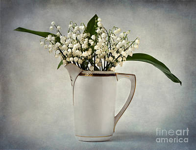Photograph - White by Barbara Corvino
