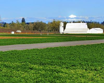 Jerry Sodorff Royalty-Free and Rights-Managed Images - White Barn Mt. Hood 22415 2 by Jerry Sodorff