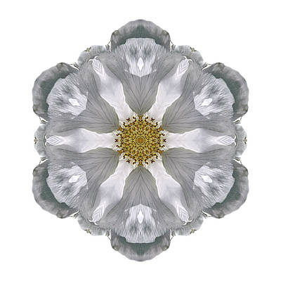 Photograph - White Beach Rose IIi Flower Mandala White by David J Bookbinder
