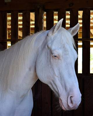 Photograph - White Beauty 1 by Sheri McLeroy