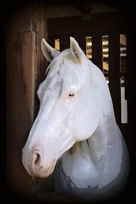 Photograph - White Beauty 2 by Sheri McLeroy
