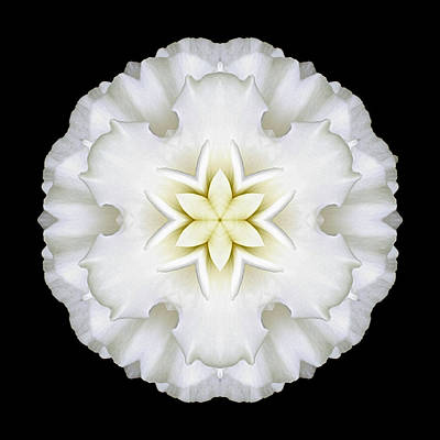 Photograph - White Begonia I Flower Mandala by David J Bookbinder
