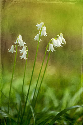 Photograph - White Bells by Mary Jo Allen