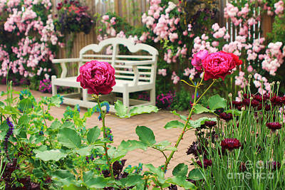 Photograph - White Bench And Pink Climbing Roses In English Garden by Beverly Claire Kaiya