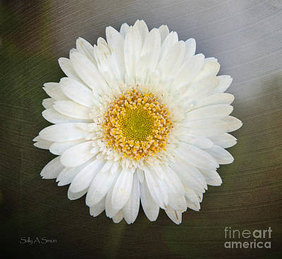Photograph - White Bergera Daisy 1 by Sally Simon