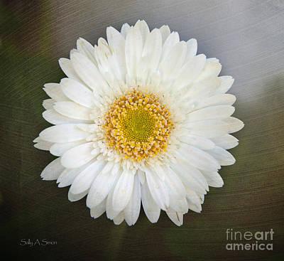 White Bergera Daisy 1 Art Print
