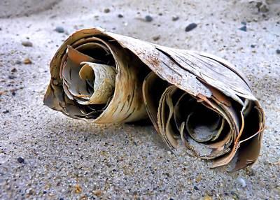 Photograph - White Birch Bark Scroll by Janice Drew