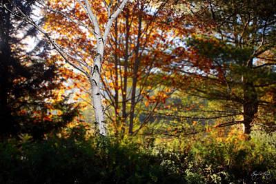 Photograph - White Birch Morning by Wayne King