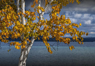 Photograph - White Birch Tree In Autumn Along The Shore Of Crystal Lake by Randall Nyhof