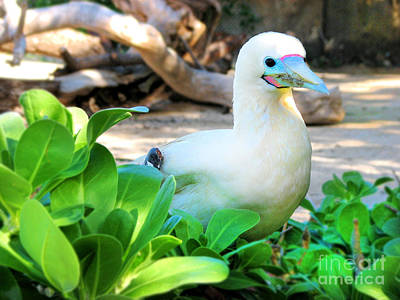 Art Print featuring the photograph White Bird by Kristine Merc