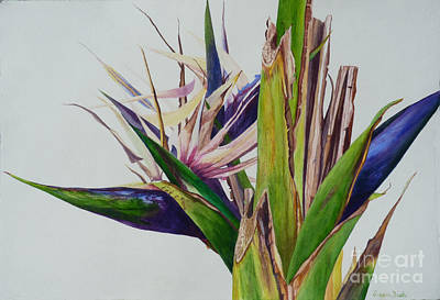 Floral Guest Room Painting - White Bird Of Paradise Tree by Susan Duda