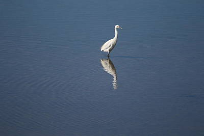 Photograph - White Bird Reflection by Phoenix De Vries