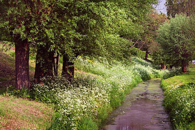 Photograph - White Bloom Along The Dutch Canal. Netherlands by Jenny Rainbow