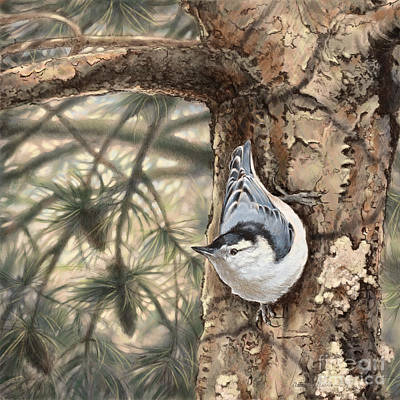 Wall Art - Drawing - White-breasted Nuthatch by Laurie Musser