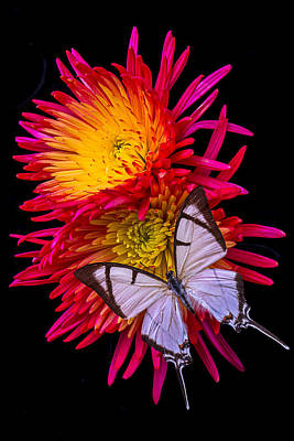 Butterfly Photograph - White Butterfly On Fire Mum by Garry Gay