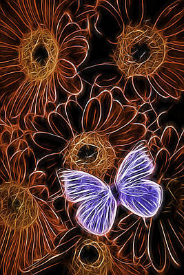 Butterfly Abstraction Photograph - White Butterfly On Orange Daisies  by Garry Gay