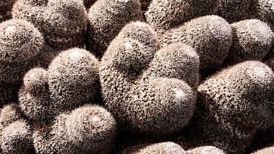 Photograph - White Cactus by Weston Westmoreland