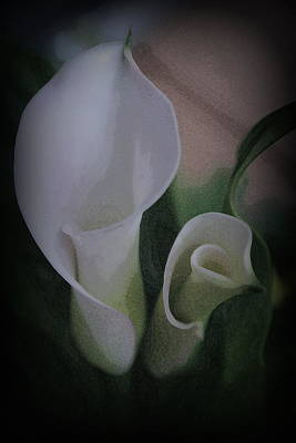 Photograph - White Calla Lilies  by Kay Novy