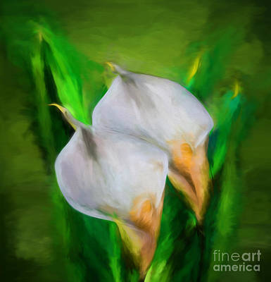 Photograph - White Calla Lilies by Shirley Mangini