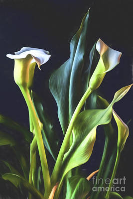 Photograph - White Calla Lily Bouquet by Shirley Mangini