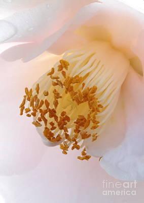 White Camellia Closeup Art Print by Carol Groenen