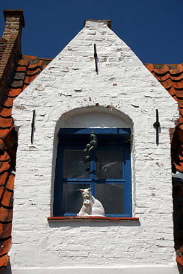 Photograph - White Cat At Blue Window by RicardMN Photography