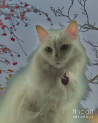 White Cat Dreams Art Print by Judy Via-Wolff