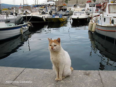 Hydra Island Photograph - White Cat In Hydra by Alexandros Daskalakis