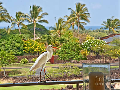 Photograph - White Cattle Egret Bird On Hawaiian Porch by Valerie Garner
