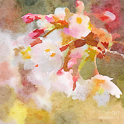 Painting - White Cherry Blossoms Digital Watercolor Painting 4 by Beverly Claire Kaiya