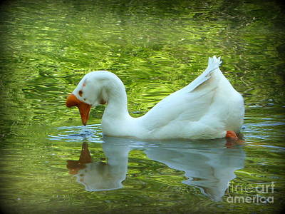 Photograph - White Chinese Goose Curtsy  by Susan Garren