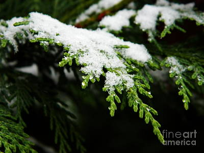Photograph - White Christmas by Andrea Anderegg