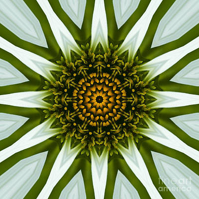 White Coneflower Mandala 12 Art Print by Carrie Cranwill