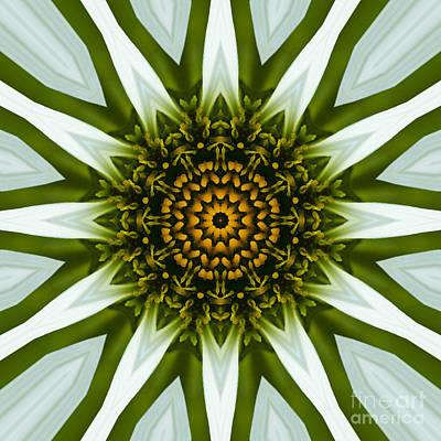 White Coneflower Mandala 12 Art Print