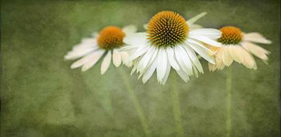 Coneflower Photograph - White Coneflower Trio  2 by Rebecca Cozart