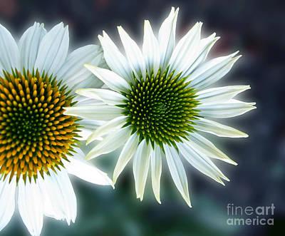 White Conehead Daisy Art Print