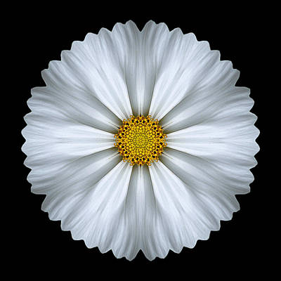 Photograph - White Cosmos Flower Mandala by David J Bookbinder