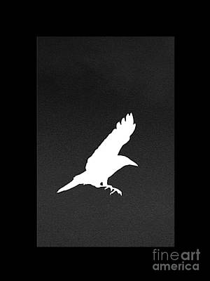 Crow In Flight Digital Art - White Crow by Linsey Williams