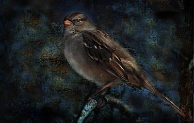 White-crowned Sparrow Art Print by Barbara Manis