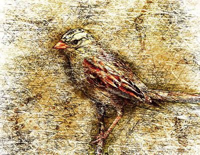 Abstract Wildlife Digital Art - White Crowned Sparrow by Gary Bodnar