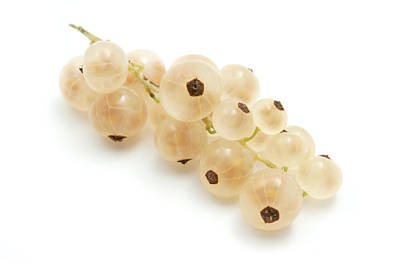 Art Print featuring the photograph White Currant  by Fabrizio Troiani