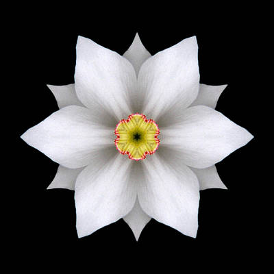 Photograph - White Daffodil II Flower Mandala by David J Bookbinder