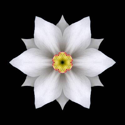 White Daffodil II Flower Mandala Art Print by David J Bookbinder