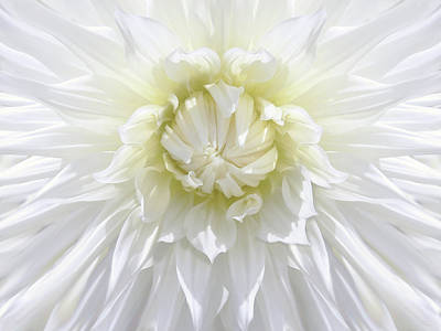 Photograph - White Dahlia Floral Delight by Jennie Marie Schell