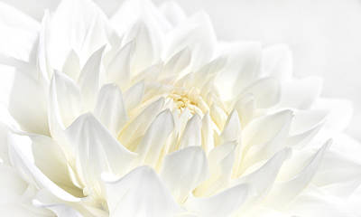 Photograph - White Dahlia Flower by Jennie Marie Schell