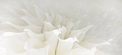Photograph - White Dahlia Flower Waves by Jennie Marie Schell